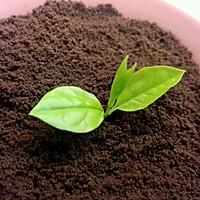 可以吃的盆栽【奥利奥盆栽】的做法图解3