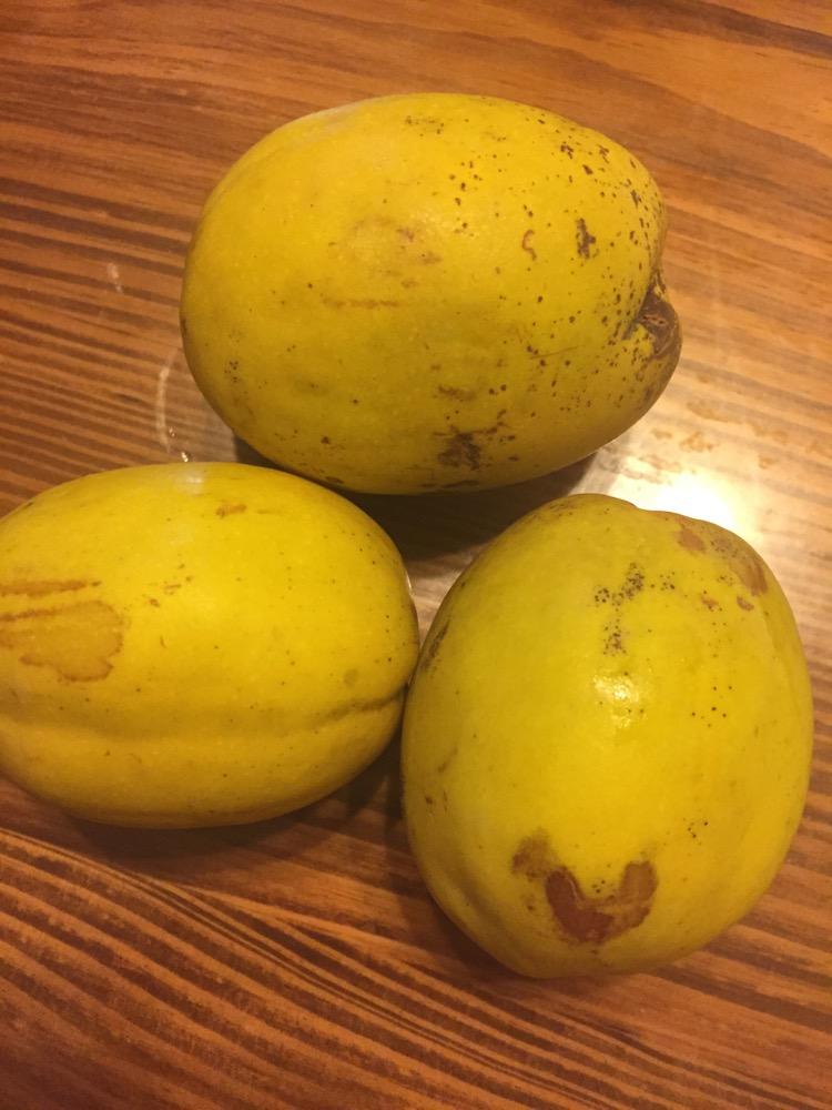 在优食汇上买的酸木瓜,心心念念,等了好几天终于收到了。之前只知道木瓜,后来百度了才明白,原来酸木瓜是云南特产,一般是青色的,放的时间越长颜色就会变成金黄色,酸木瓜在越接近黄色是越香. 用它来煮排骨汤,酸酸的,很鲜美,个人觉得一斤排骨放半个就可以了,多了有点酸。这是非常适合春天的一款汤,除了健脾消食、减肥、丰胸等功效,还可以美容。因为酸木瓜性温,不寒不燥。还等什么,赶快做起来吧!欢迎关注我的微信wxyunsh与我交流