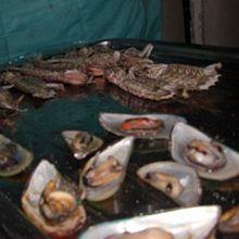 烤青口、濑尿虾