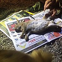 香辣鸡小兔的做法图解2
