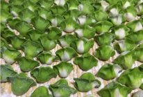 百财水饺--年夜饭必备的做法