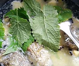 藿香薄荷鲫鱼汤(备孕怀孕忌食)的做法