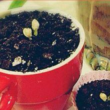 好看又好吃的盆栽奶茶·墨屿_