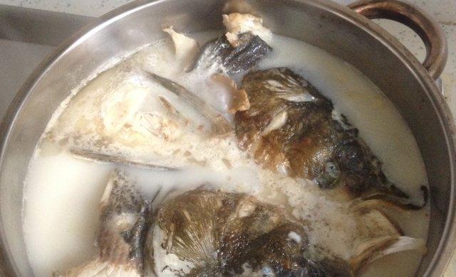 清炖鱼头(奶汤版)