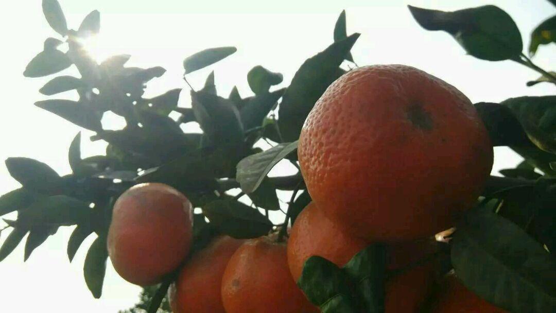 水果拼盘-椰子草莓树
