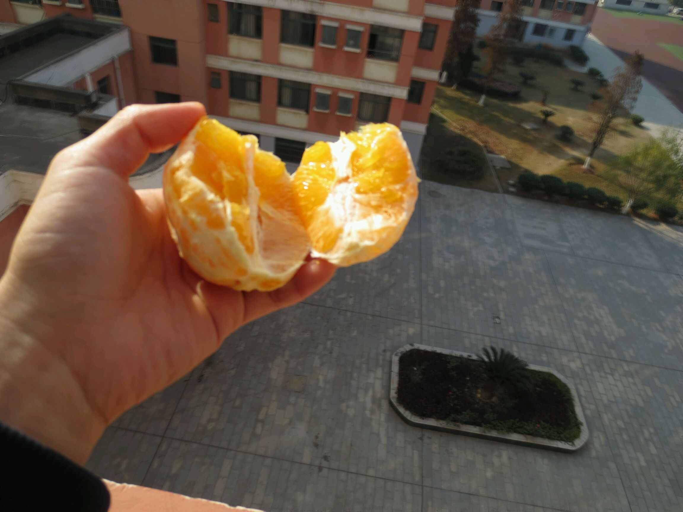 巧剥橙子的做法图解8