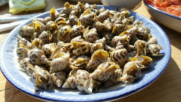 蒸扇贝,黄花鱼,虾,花螺,茶会_寂寞林风的美食日记_豆