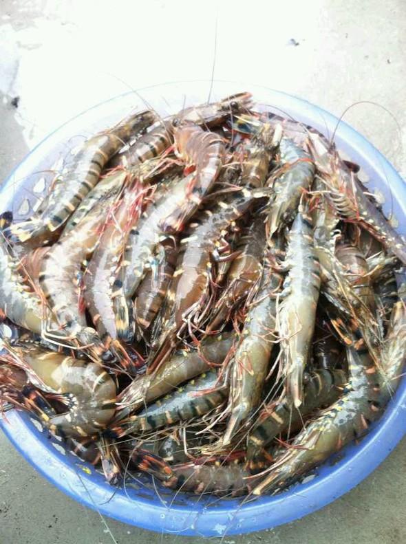 虾,花螺,果皮蒸泥蜢,开餐_天下美食尽有的美食日记_豆
