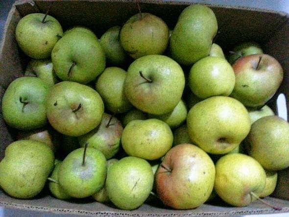 苹果梨_tangtang888的美食日记