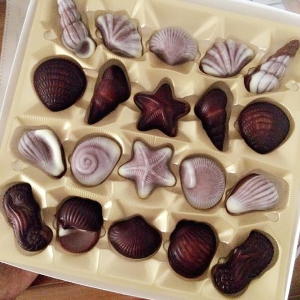 很漂亮的巧克力,小贝壳小海马可爱