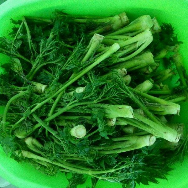 半老女人做的姜汁刺嫩芽的做法
