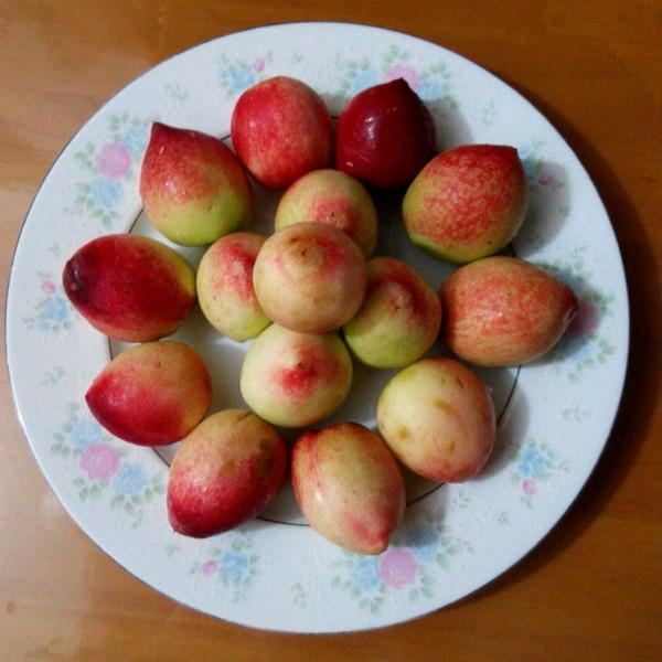 玉莹2323做的简单水果拼盘~水果的别样风情的做法