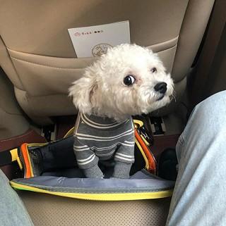 ffloveAmy的分享第一次带狗子坐飞机,全程呆客舱的经历。。。