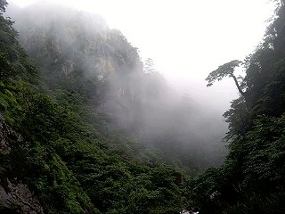 Louisa777的大明山——原始次森林保护基地