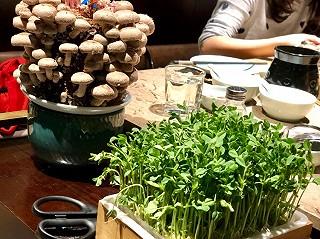 503飞啊的排队堪比喜茶的捞王火锅🍲|豆苗飘在锅里了,吸饱浓汤的蔬菜总是特别美味,更别说这满满的新鲜气息......