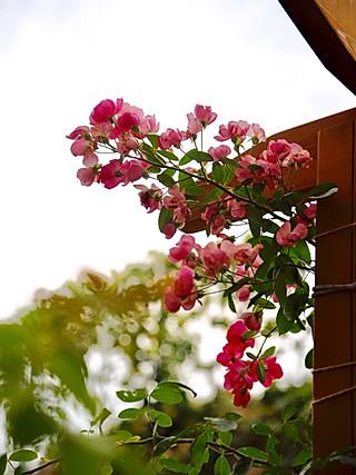 椛吃的初秋小花园~