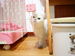 小尼在家Amber的多图预警(>_<)肥猫来蹭一下话题