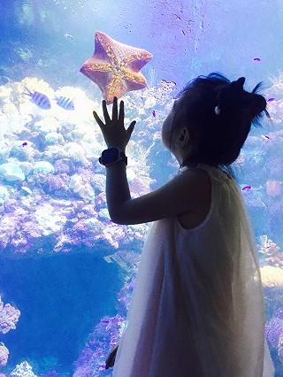 鈅鈅宝妈咪的青岛,一座小岛如梦,梦里花开繁盛!