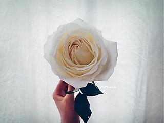 justin莫妮卡的只是花兒
