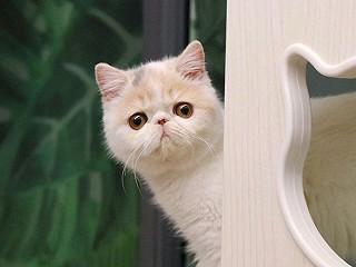 晚安 没有吃的 只有 撸猫😁 我家大头的帅照