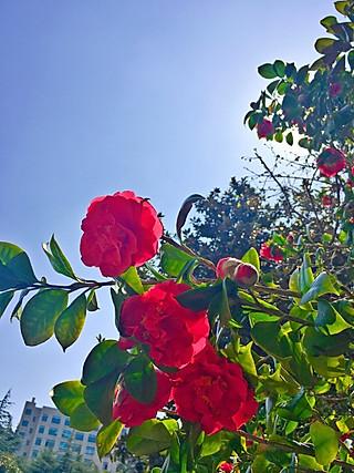 落叶飘ufo的天暖了,花开得艳丽招摇,按捺不住的美放肆地宣泄。春天,真美~