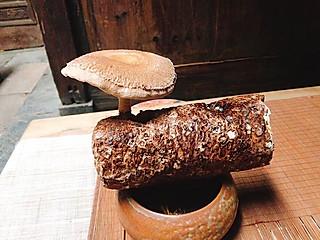 广东爱吃的小兔的一个菇一盆菜