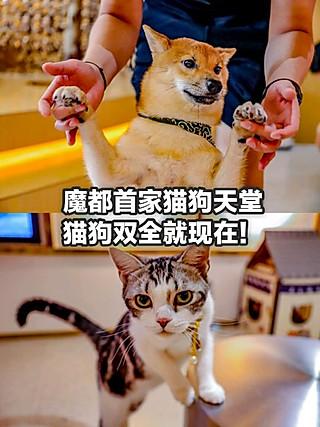 标爷吃光上海的逗狗🐶+撸猫🐱,成为人生赢家,走上人生巅峰!!👏
