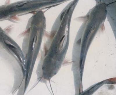 鱼类大全名称图片