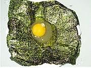 爆浆鸡蛋的做法图解5