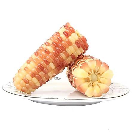 西双版纳香糯小玉米 4斤/10-12根