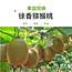 眉县徐香猕猴桃绿心奇异果30粒 60-80g/个小图5